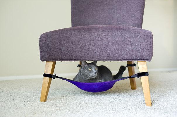 kedi-hamagi