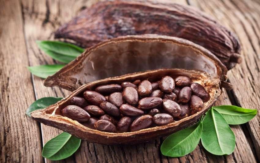 kakao-cekirdekleri